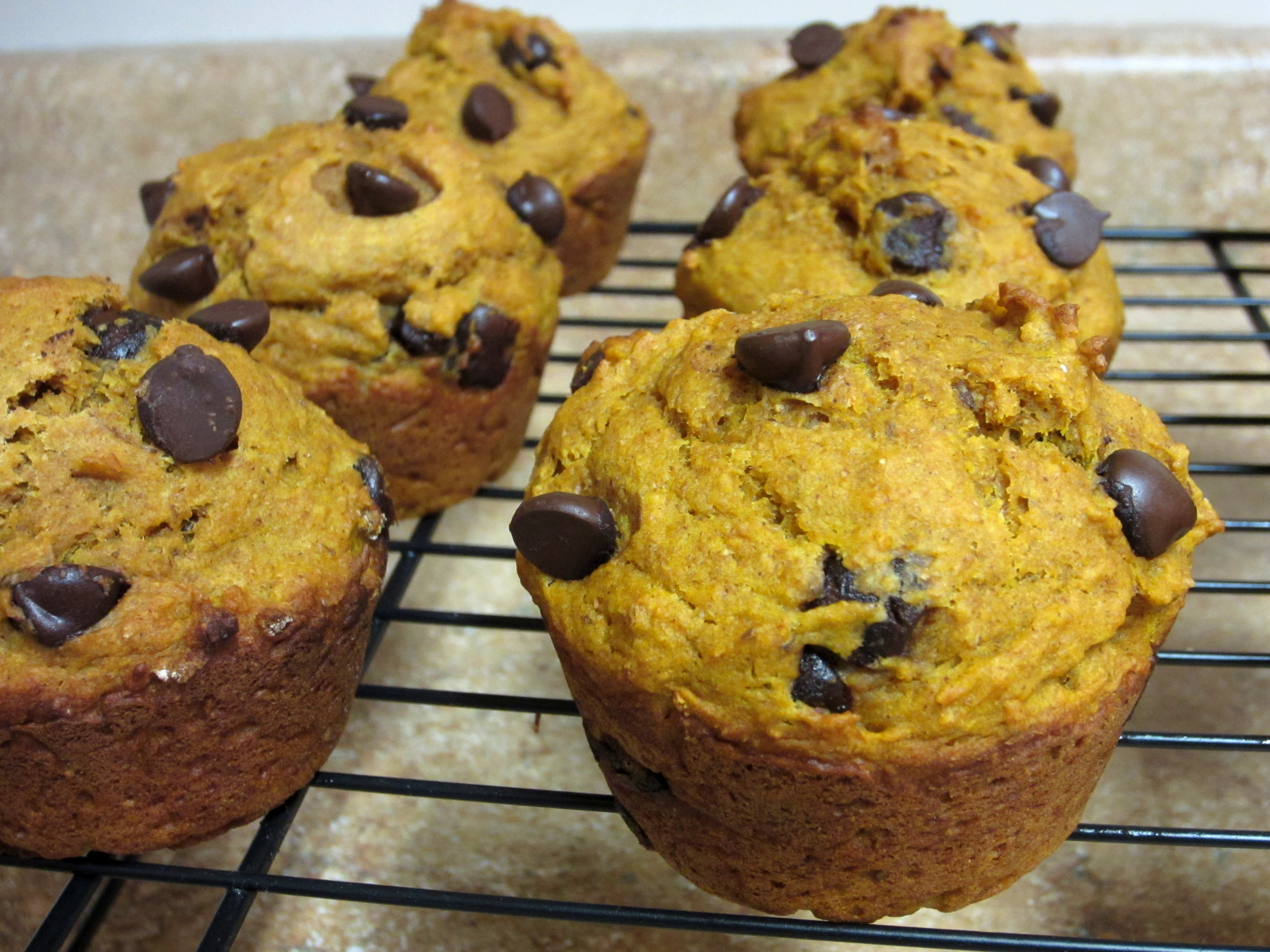 Whole Wheat Pumpkin Chocolate Chip Muffins - Love to be in the Kitchen