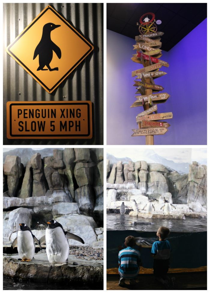 Antarctic Adventure at the Loveland Living Planet Aquarium