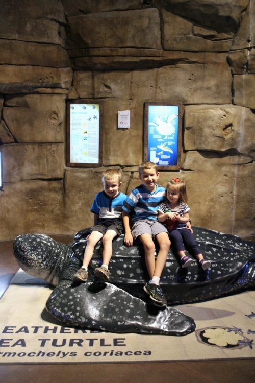 Ocean Explorer at the Loveland Living Planet Aquarium
