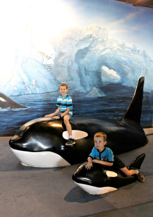 Orcas at Loveland Living Planet Aquarium