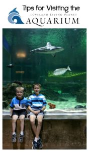 Tips for Visiting the Loveland Living Planet Aquarium
