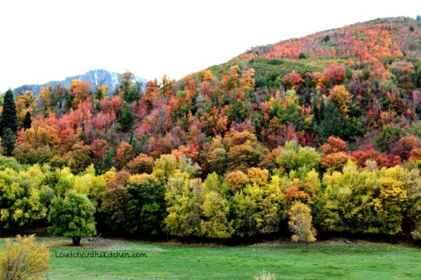 fall in Utah from LovetobeintheKitchen